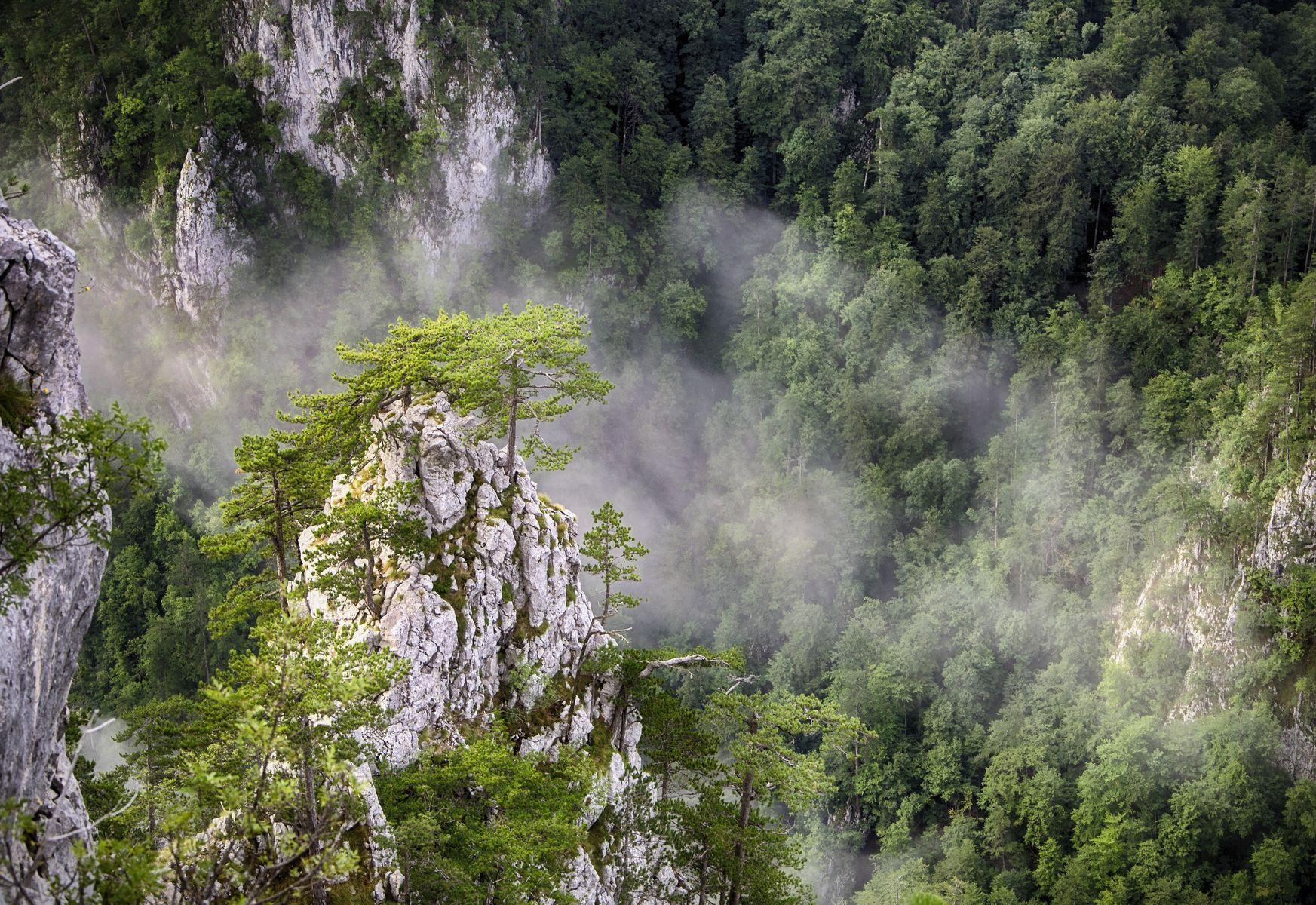 Kanjon Rače (The Raca River Gorge) - Tara, Vesna Mijailović
