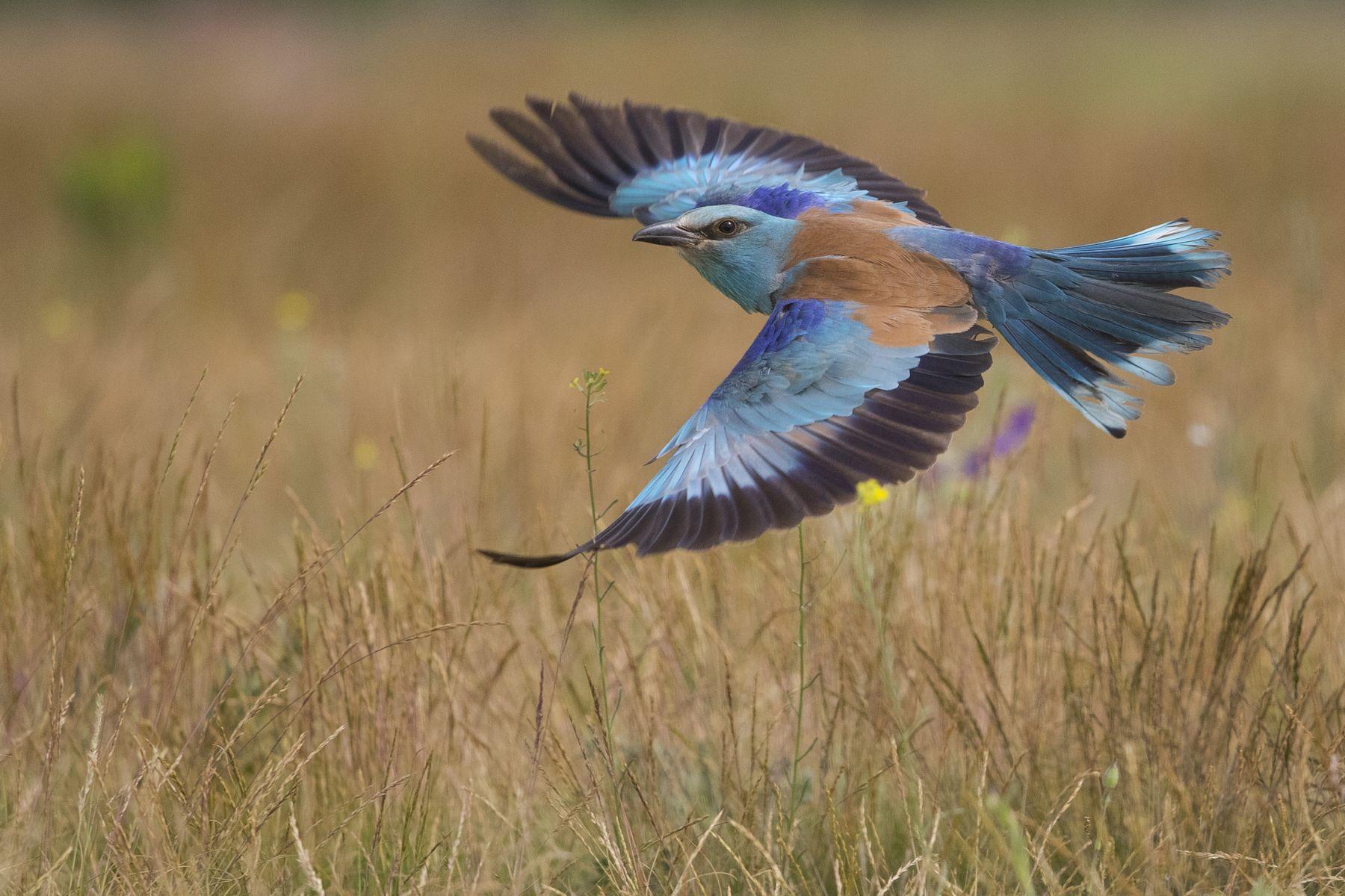 Let (The flight), Levente Szekeres