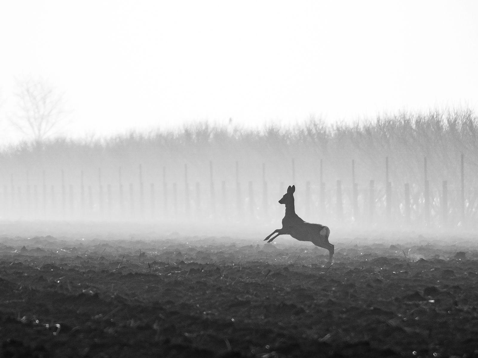 Ples u magli (Dance in the fog), Dejan Valek