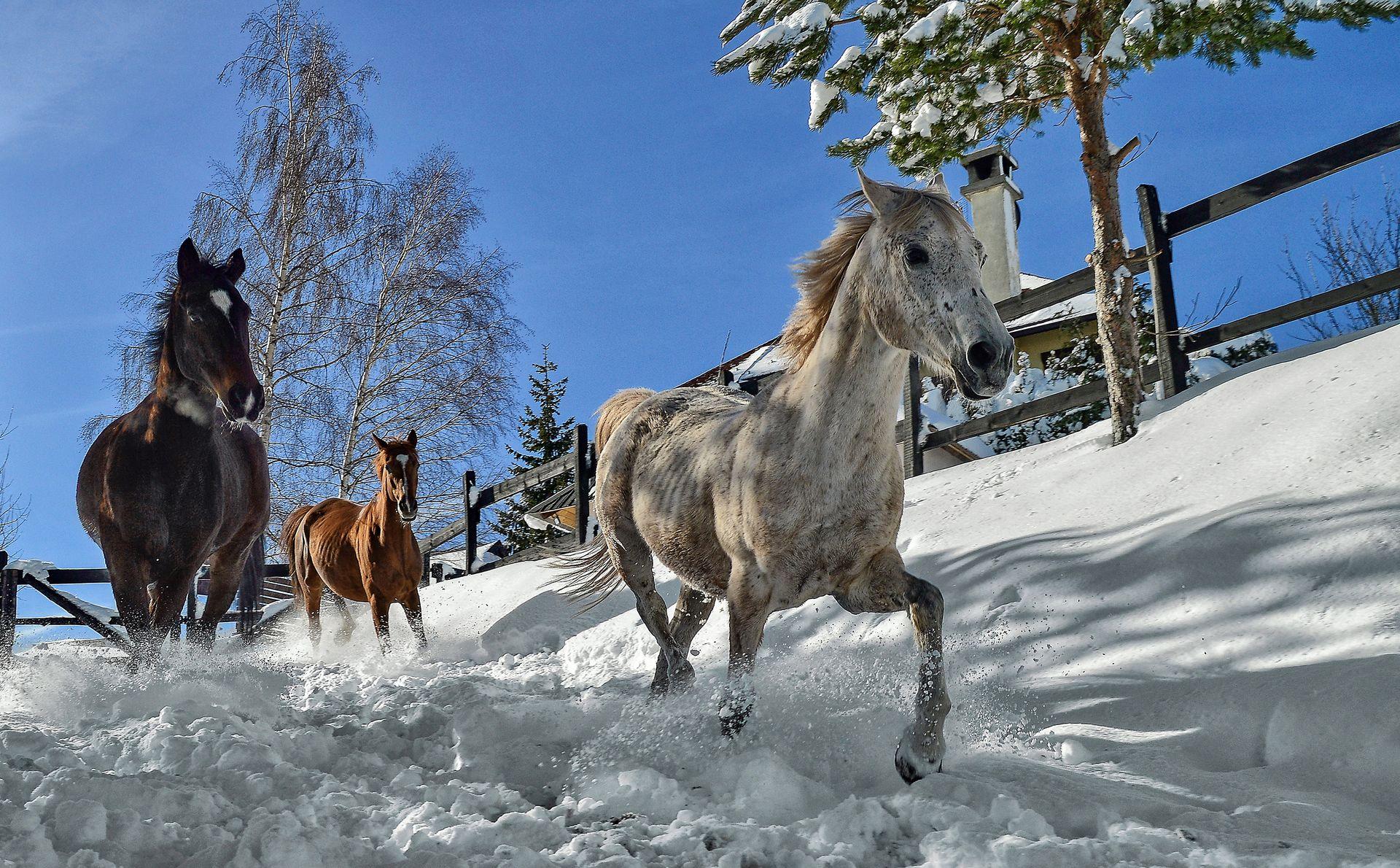 Razigrani konji (Playful horses), Miloš Karaklić